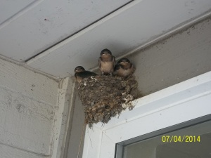 They built this nest right outside our front door :)